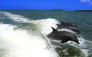 Dolphins by EfvonIks