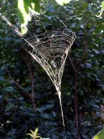 Cob Web by JocelyneR