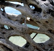 driftwood hues and views by dreadedhippie