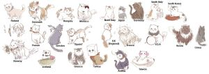 Axis Power Hetalia CAT Eng Sub by Maykahurkmans
