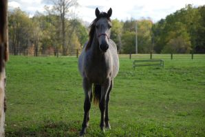 Yearling6 by EquestrianPassion