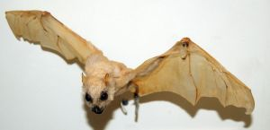 Stock : White Bat by Deaths-stock
