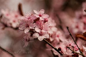 Spring II by Gambassi