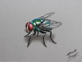 The fly DRAWING by Marcello Barenghi by marcellobarenghi