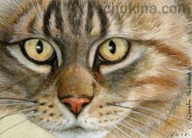 ACEO Tabby Cat by sschukina