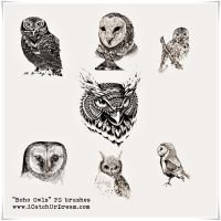 Boho Owls PS brushes by iCatchUrDream