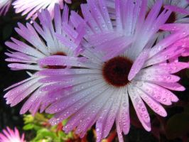 water drops on a flower by ShadowOfTheDay14