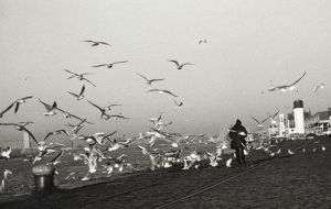 seagulls by veca
