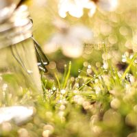 Fresh bokeh by EliseEnchanted