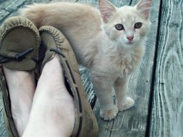 Kitty and my shoes by kshelton2011