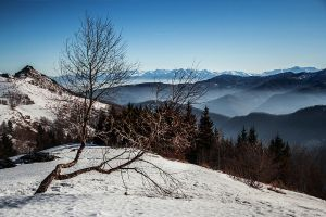 Lonely Tree by Francy-93