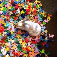 one thousand and one origami bunnies. by abunnydance
