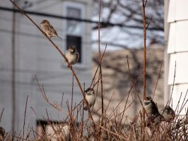 Wintering Finches 01 by tmfNeurodancer