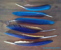 Feather Stock- New Macaw by EagleFlyte