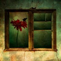.:inside:. by hayal25