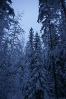 Winter Woods in Finland 14 by wolfheart83