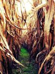 Path Through The Corn by TemariAtaje