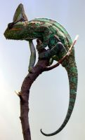 Veiled Chameleon by faolruadh