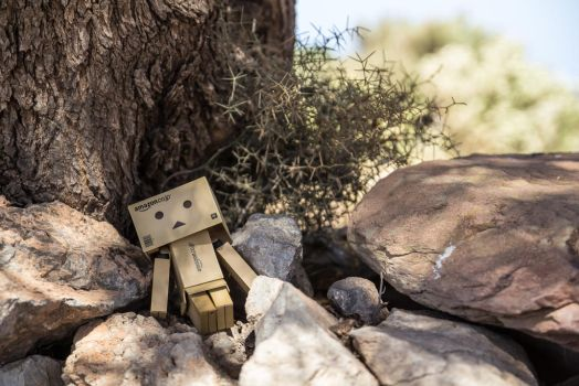 Danbo relax in dry forest by coLdik