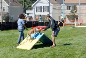 2014 Dog Festival, Try It Dog Obstacles 6 by Miss-Tbones