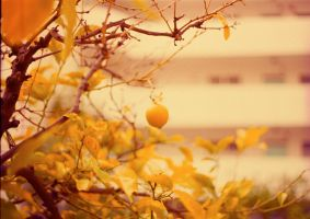 orange trees by bright-white-kite