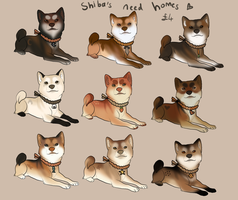Shiba Inu adoptables! -OPEN- by Kitchiki
