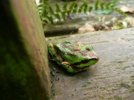 3 Legged Frog by Track-Maidens