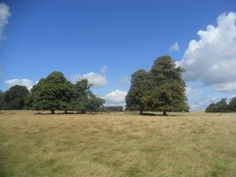Petworth House and Park 093 by VIRGOLINEDANCER1