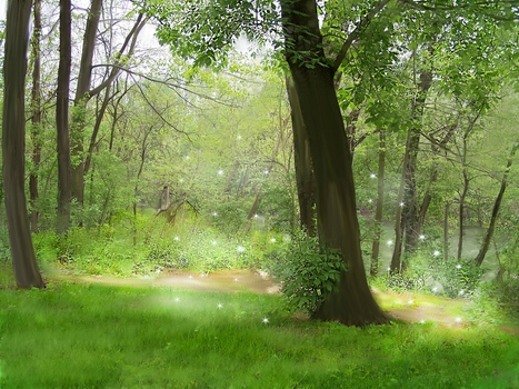 Forest by Magama1980