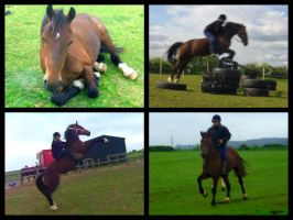 Thorndonpark Melody, Welsh Cob Showjumper by StarCrossedPsycho
