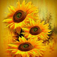 Sunflowers by hallbe