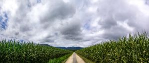 Cornfield path by DasHammett