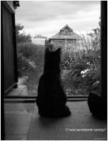 Of what cats dream? by Angelov-net