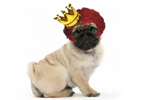 TEh PugKing wigtth Afro by PugKing