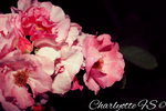 Flowers, by charlyotte
