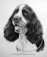 English Springer Spaniel by Dhekalia