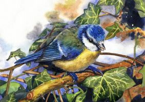 Blue tit by JoaRosa