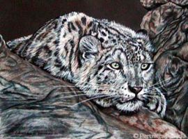 Snow Leopard by stalksthedawn