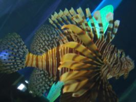 Lionfish by firesember222