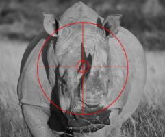 RHINO IN THE CROSS-HAIRS by blk-panther