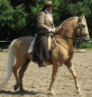 Lusitano Palomino Stock by Wildcat2310