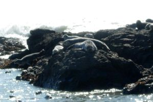 Seals by Isis089