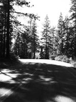 Down The Woodland Road- b+w by TheShadowfang