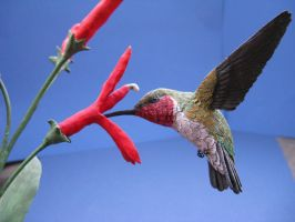 Ruby-throated Hummingbird 2 by Bagheera3