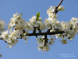 spring 2012_28 by metalsympho