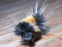 Wooly Bear Caterpillar by Zafer-Aistra