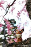 Fox Squirrel and cherry blossoms by MemiorsOfAnOtaku