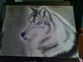 Wolf done in Charcoal a.k.a Wolfy-Chan by Zolunerro