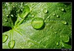 Droplets 02 by DarthIndy