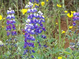 Wildflowers by jccowles